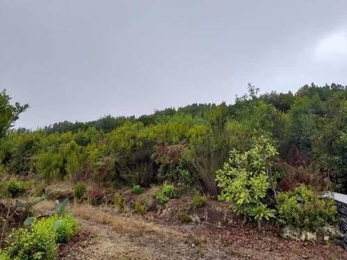 imagen 2 de Venta de fincas con frutales en Tenerife