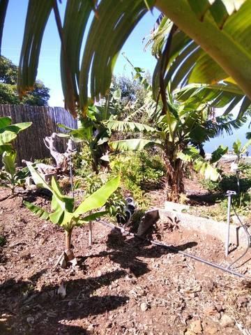 imagen 1 de Venta de terreno rústico La Punta (Tenerife)