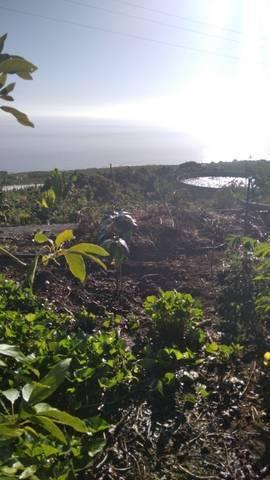 imagen 4 de Venta de terreno rústico La Punta (Tenerife)