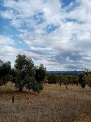 imagen 2 de Venta de finca de olivos y almendros en La Fresneda (Teruel)