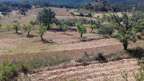 imagen 2 de Venta de finca para cultivo de trufa en Teruel