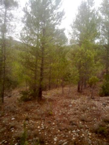 imagen 1 de Venta de finca en Beceite (Teruel)