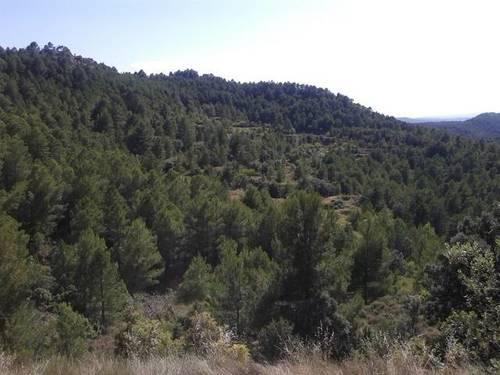 imagen 1 de Venta de finca de pinar y cultivo en Monroyo