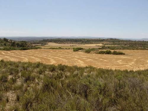 imagen 1 de Venta de finca de caza mayor y menor y Alcañiz (Teruel)