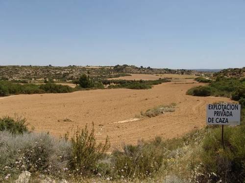 imagen 5 de Venta de finca de caza mayor y menor y Alcañiz (Teruel)