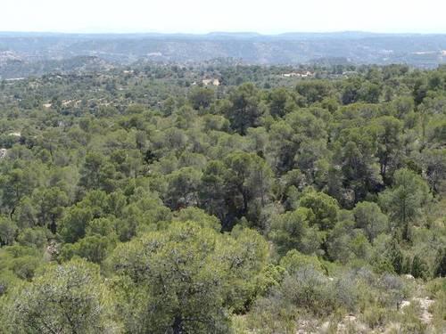 imagen 4 de Venta de finca de caza mayor y menor y Alcañiz (Teruel)