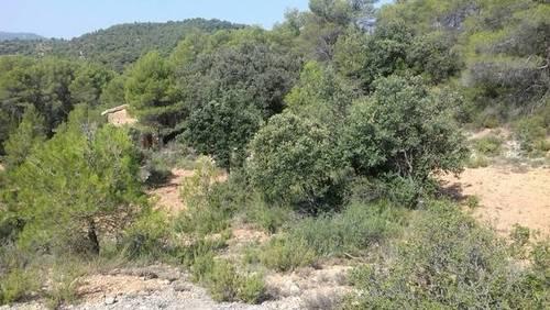 imagen 1 de Venta de finca con caseta en Peñarroya de Tastavins