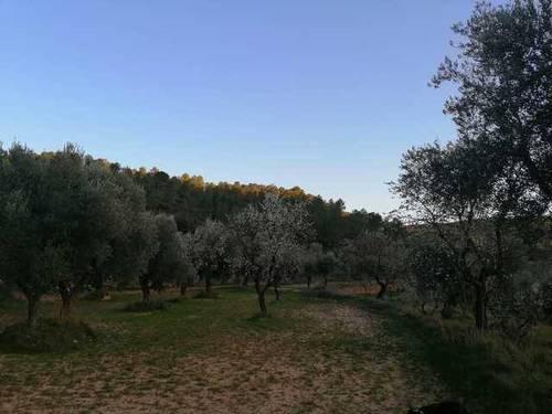 imagen 3 de Venta de finca ecológica con masía en Calaceite (Teruel)
