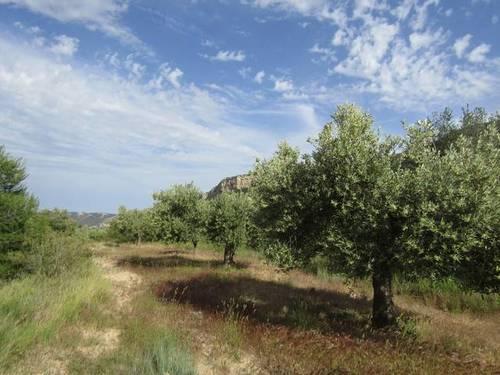 imagen 4 de Venta de finca rústica con cuarto de aperos en Castellote (Teruel)