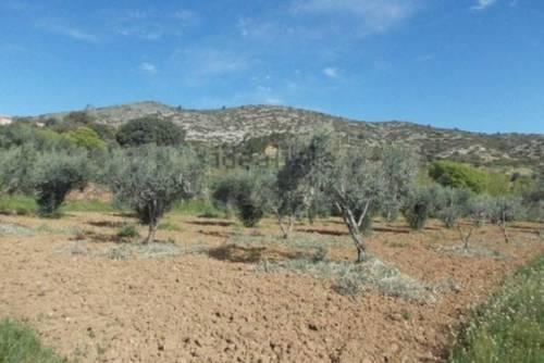 imagen 1 de Venta de olivar en Castellote (Teruel)