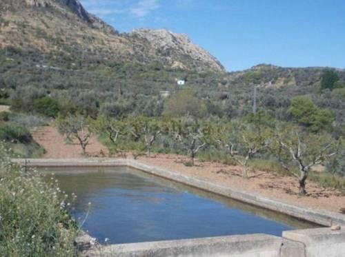 imagen 2 de Venta de olivar en Castellote (Teruel)
