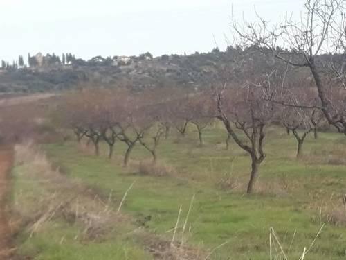 imagen 2 de Venta de finca de almendros en Cretas (Teruel)