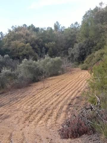 imagen 5 de Venta de finca de almendros en Creta