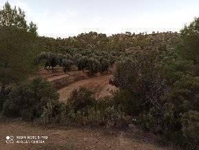 imagen 5 de Venta de finca con masía en Calaceite