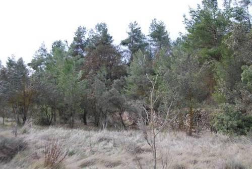 imagen 1 de Venta de finca con árboles milenarios en La Fresneda (Teruel)
