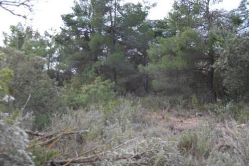 imagen 4 de Venta de finca con árboles milenarios en La Fresneda (Teruel)