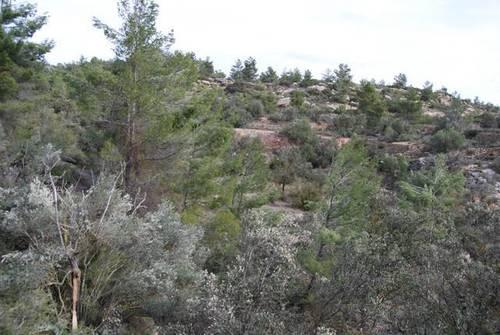 imagen 2 de Venta de finca con árboles milenarios en La Fresneda (Teruel)