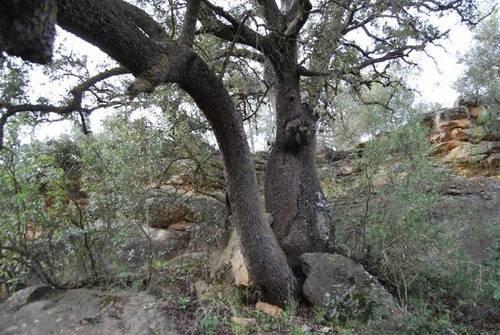 imagen 3 de Venta de finca con árboles milenarios en La Fresneda (Teruel)