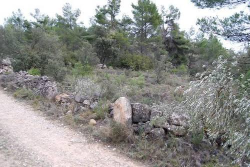 imagen 5 de Venta de finca con árboles milenarios en La Fresneda (Teruel)