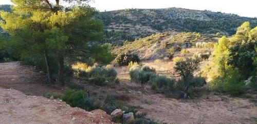 imagen 3 de Venta de finca rústica en Beceite (Teruel)