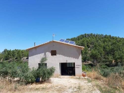 imagen 4 de Venta de finca de olivos en Torre del Compte (Teruel)