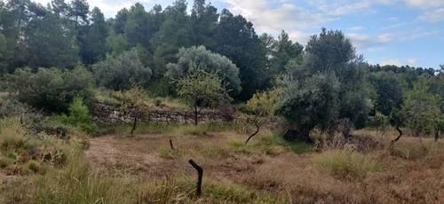 imagen 3 de Venta de finca rústica con caseta en Valderrobres (Teruel)