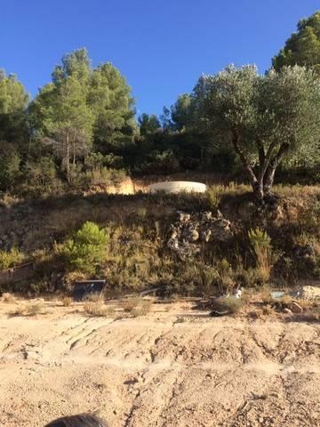 imagen 1 de Venta de finca con olivos y frutales en Calaceite (Teruel)
