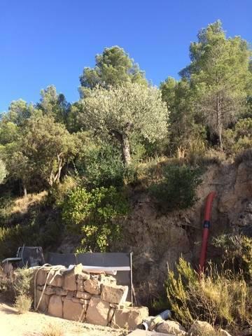 imagen 3 de Venta de finca con olivos y frutales en Calaceite (Teruel)