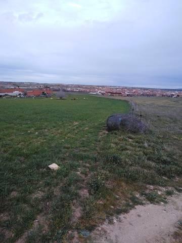 imagen 2 de Venta de finca de secano en Menasalbas (Toledo)
