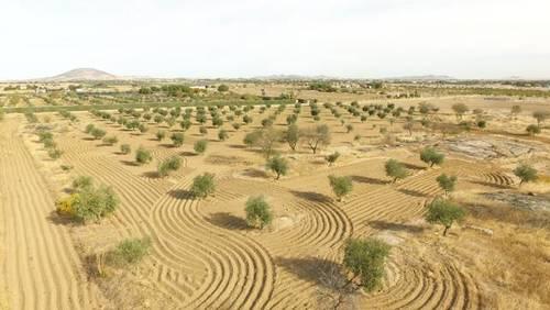 imagen 1 de Venta de olivar en Sonseca (Toledo)