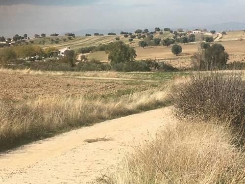 imagen 4 de Venta de finca rústica bien ubicada en Santa Cruz del Retamal (Toledo)