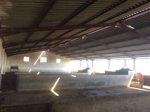 imagen 4 de Venta de explotación ganadera en Ugena