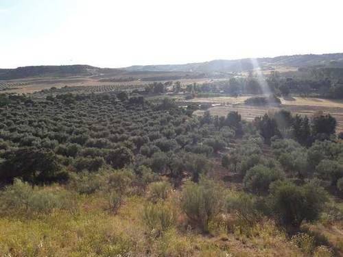 imagen 1 de Venta de olivar y huerta en La Pueblanueva (Toledo)