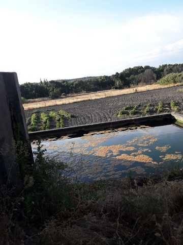 imagen 5 de Venta de olivar y huerta en La Pueblanueva (Toledo)
