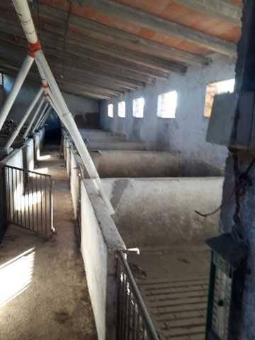 imagen 3 de Venta de olivar y huerta en La Pueblanueva (Toledo)