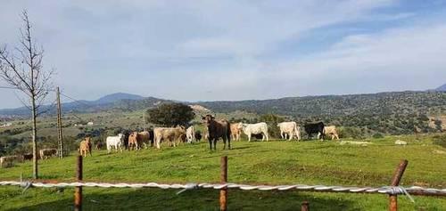 imagen 2 de Venta de finca con núcleo zoológico en Almorox (Toledo)