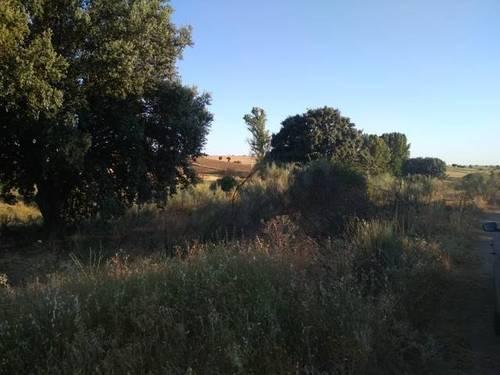 imagen 2 de Venta de finca rústica en Santa Cruz del Retamar