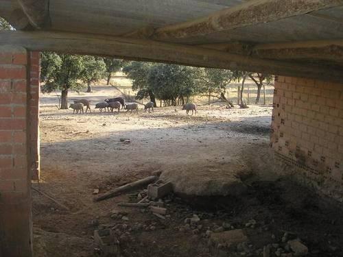 imagen 2 de Venta de finca con corrales para ganado en Alcolea del Tajo (Toledo)