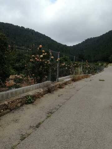 imagen 6 de Venta de casa rural con terreno en Llauri (Valencia)