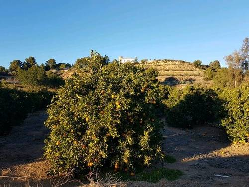 imagen 2 de Venta de finca de naranjos en Montserrat (Valencia)