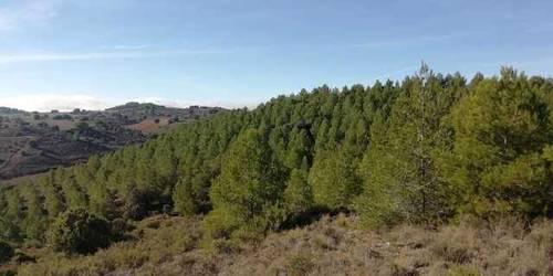 imagen 2 de Venta de finca en Villagordo de Cabriel (Valencia)