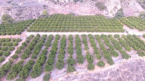 imagen 2 de Venta de finca de naranjos en Xátiva