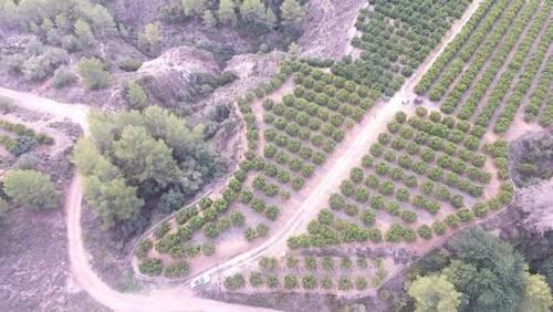 imagen 3 de Venta de finca de naranjos en Xátiva