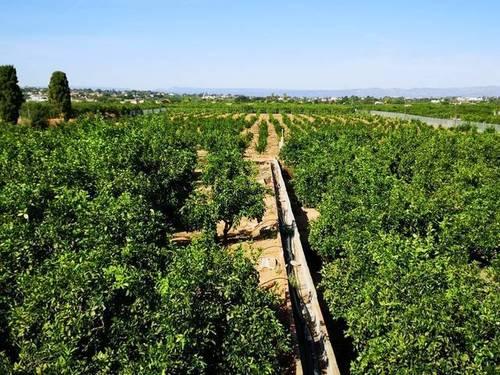 imagen 1 de Venta de finca de naranjos con casa rural en Valencia