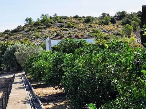 imagen 5 de Venta de finca de naranjos con casa rural en Valencia