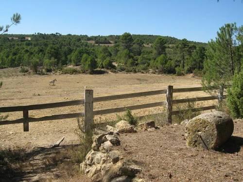 imagen 5 de Venta de finca con casa rural en Requena