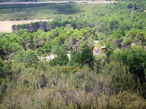 imagen 7 de Venta de finca con casa rural en Requena