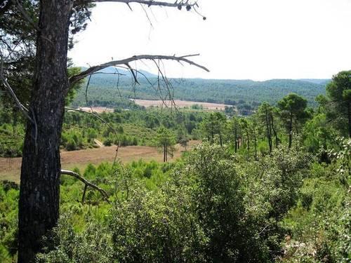 imagen 6 de Venta de finca con casa rural en Requena