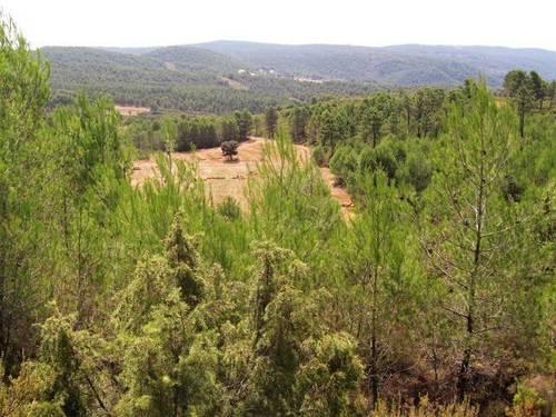 imagen 8 de Venta de finca con casa rural en Requena