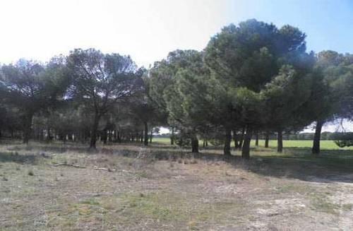 imagen 2 de Venta o alquiler de parcela en Alcazarén (Valladolid)